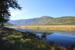 Orillas de Madison River Yellowstone National Park Fotografía de archivo