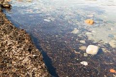 A orillas del lago Fotografía de archivo libre de regalías