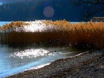 A orillas del lago con las cañas en retroiluminado Fotos de archivo libres de regalías