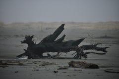 Orillas del océano Foto de archivo