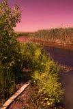 Orillas del río coloreadas extracto Imagen de archivo