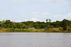 Orinoco Delta Royalty Free Stock Photography
