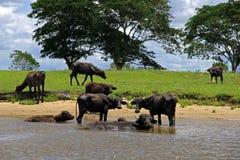 Orinoco River fotos de stock