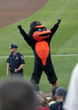 The Oriole Bird Stock Images