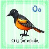 Oriole Royalty Free Stock Photos