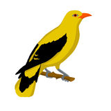 Oriole-Vogelvektorart flach Stockbilder