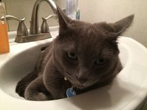 Orion's Bed?. Cat in a sink Stock Photography