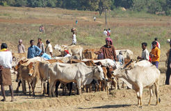 Orissa tribal rural cattle weekly market Stock Photography