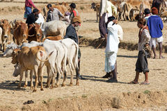 Orissa tribal rural cattle weekly market Royalty Free Stock Photo