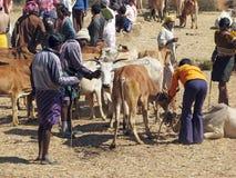 Orissa tribal rural cattle weekly market Stock Photos