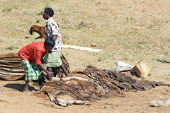 Orissa tribal rural cattle weekly market Stock Images