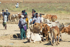 Orissa tribal rural cattle weekly market Stock Photos