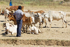 Orissa tribal rural cattle weekly market Royalty Free Stock Photography