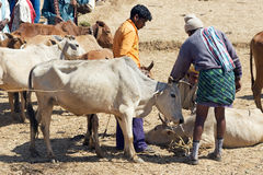 Orissa tribal rural cattle weekly market Royalty Free Stock Photos