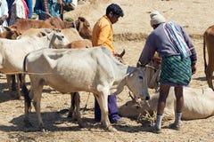 Orissa tribal rural cattle weekly market Royalty Free Stock Photos