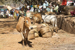 Orissa tribal rural weekly market Stock Photo
