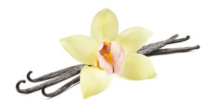 Orizzontale del fiore del baccello di vaniglia isolato su fondo bianco Immagini Stock Libere da Diritti