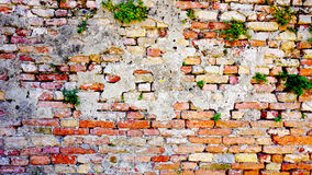 Orizzontale del muro di mattoni e della pianta di decadimento in Burano Immagine Stock