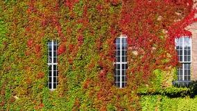Orizzontale verde della parete a Cityhall immagine stock libera da diritti