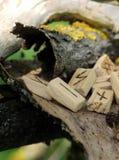 orizzontale Vista laterale sulle rune di legno, che si trovano su una corteccia asciutta da un albero Futhark runico nell'element fotografia stock libera da diritti