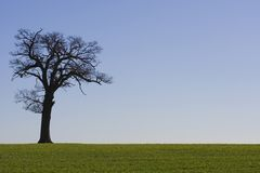 Orizzonte 2 dell'albero Fotografie Stock