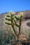 Orizzonte del cactus immagini stock
