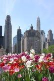 Orizzonte del Chicago con i fiori fotografia stock