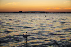 Orizzonte della città al tramonto Immagini Stock