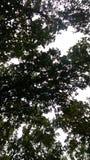 Orizzonte della foresta fotografia stock