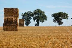 Orizzonte delle pile e degli alberi della paglia Immagini Stock
