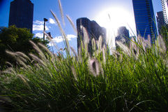 Orizzonte di Chicago nell'erba immagine stock