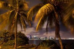 Orizzonte di Miami tramite le palme Fotografia Stock