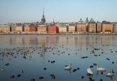 Orizzonte di Stoccolma nell'inverno con gli uccelli acquatici fotografia stock libera da diritti