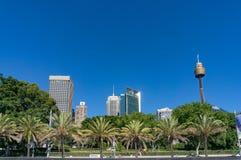 Orizzonte di Sydney con i palmtrees su priorità alta Immagine Stock Libera da Diritti