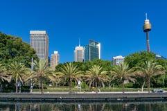 Orizzonte di Sydney con le palme su priorità alta Immagini Stock Libere da Diritti