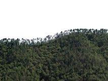 Orizzonte di Treeline sulle colline boscose, isolate contro il cielo bianco del fondo fotografie stock