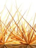 Orizzonte dorato 2 Fotografia Stock