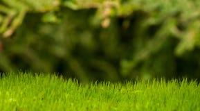 Orizzonte muscoso Fotografia Stock