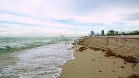 Orizzonte stupefacente e cielo blu dell'Oceano Atlantico di bellezza Gabbiani sulla spiaggia del sud di Miami video d archivio