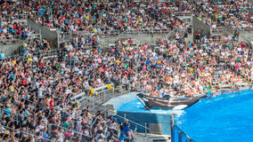 Orka op stadium Royalty-vrije Stock Foto