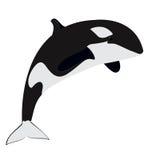 Orka - zabójcy wieloryb Zdjęcia Royalty Free