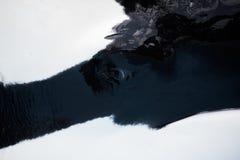 Orka zabójcy wieloryba oka zakończenie Zdjęcie Royalty Free