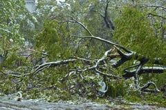 Orkaan-beschadigde auto Stock Afbeeldingen