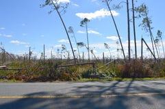 Orkaan Beschadigde Bomen stock afbeelding