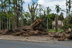 Orkaan Maria Damage in Puerto Rico stock foto