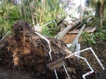 Orkan Irma Damage Arkivbild