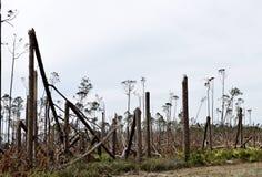 Orkan Michael Tree Damage #1 arkivfoton