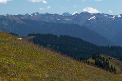 Orkan Ridge Arkivfoto