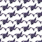 Orki lub zabójcy wieloryb Bezszwowy akwarela wzór Obraz Royalty Free