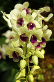 Orkidé 14 Royaltyfri Bild